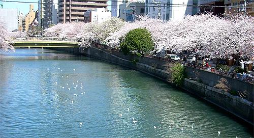 20080401桜③