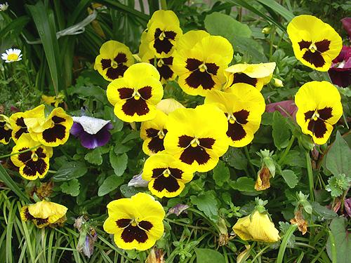20080515花①