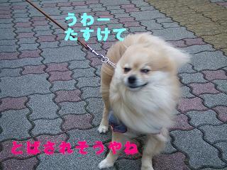 s-画像 041