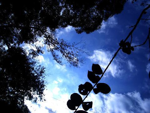into the sky