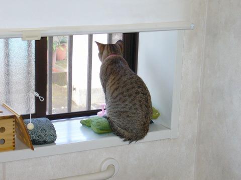 こうして彼女は外を見つめる。