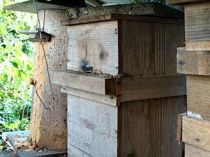 01蜂を飼う人