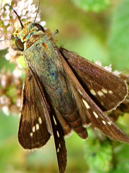 11蛾かな蝶かな、どっちかな
