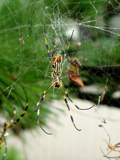 17蜘蛛だよー
