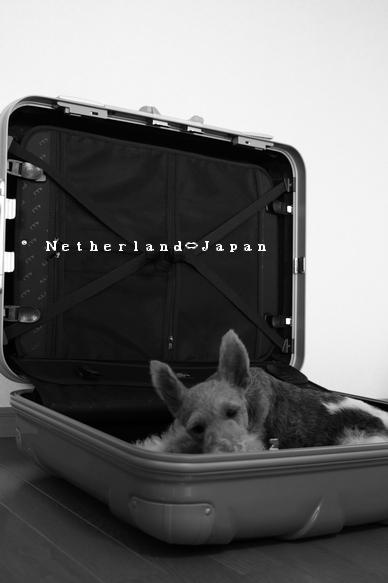 オランダ行き④