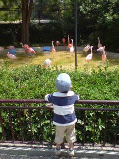 白庵zoo