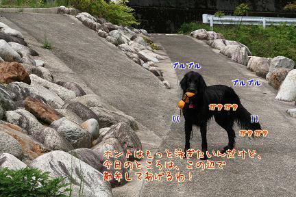 nL1VqlhN.jpg