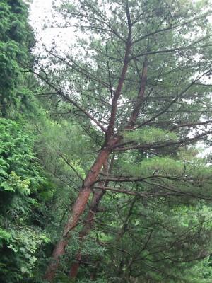 久多良木3