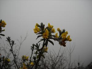 200904ヒマラヤの花04