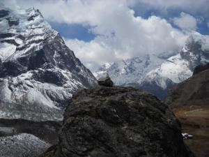 200904ネパールの鳥2