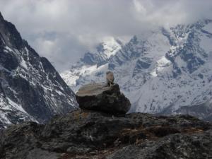 200904ネパールの鳥3