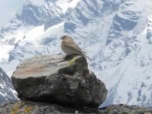 200904ネパールの鳥4