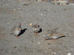200904nepal雷鳥4
