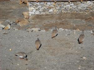 200904nepal雷鳥5