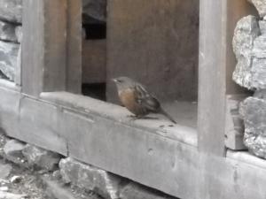 200904ネパールの鳥7