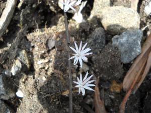 200904ヒマラヤの花18
