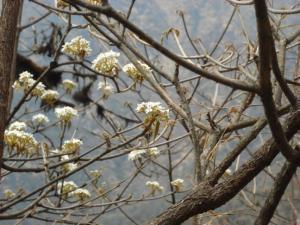 200904ヒマラヤの花19