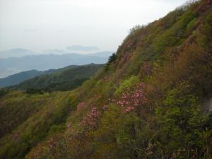 20090519西赤石山11