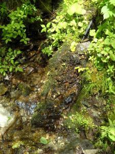 20090519西赤石山8
