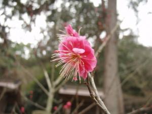 20090207吉備津彦神社3
