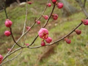 20090207吉備津彦神社2