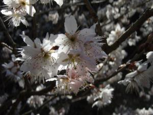 20090315佐木島・太平山11