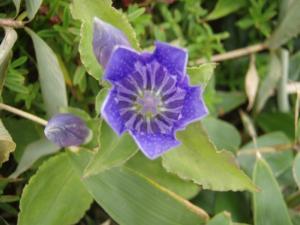 20080912伊予富士の花