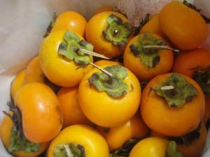 20081109柿