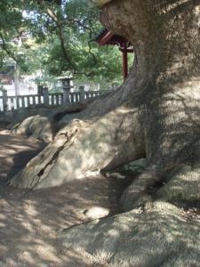 20081210善通寺5