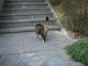 20081228ネコさん