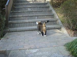 20081228ネコさん2