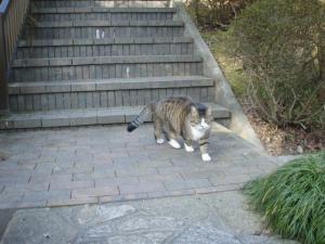 20081228ネコさん3