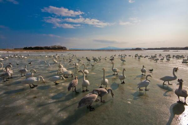 トウフツ湖全面結氷