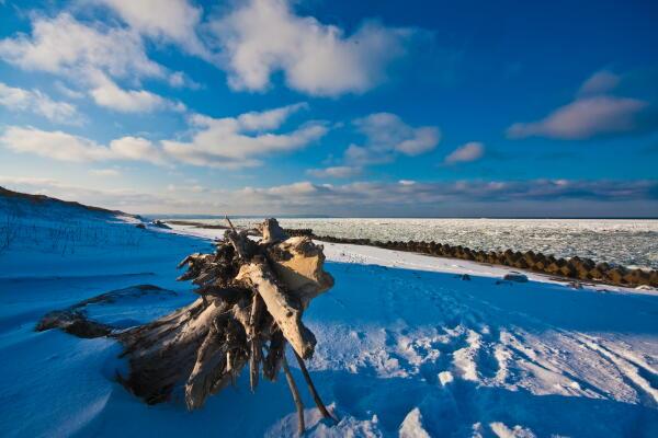流木と流氷
