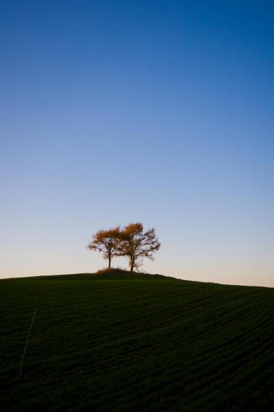秋の夕暮れ(夫婦の木)