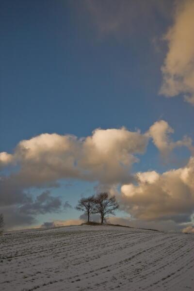 夫婦の木(初冬)
