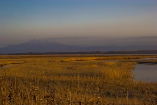 芦原と斜里岳( 濤沸湖 )