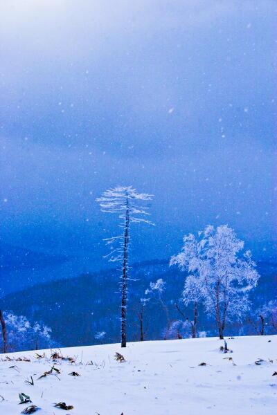 樹氷(藻琴山)