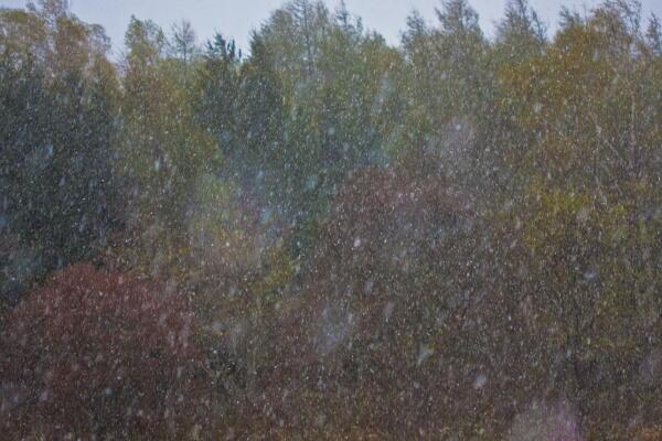 なごり雪?