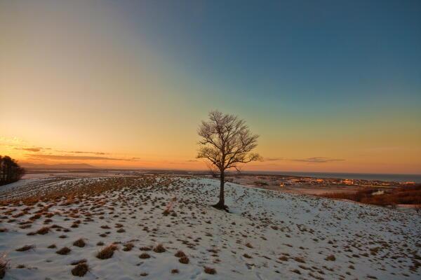 丘に立つ木