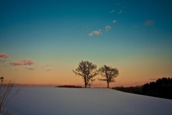 夫婦の木 (冬の夕暮れ)