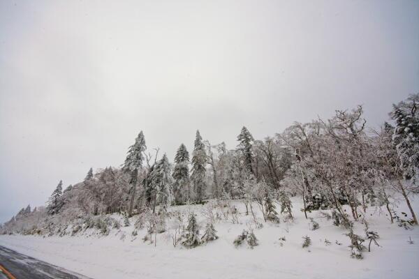 樹氷 (藻琴山)