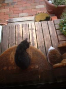 玄関ドア前の黒猫