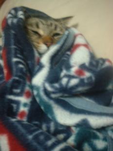 チー毛布で丸々