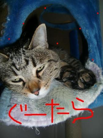 店番猫チーノが最近仕事をしません!