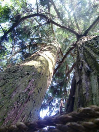 感動した木