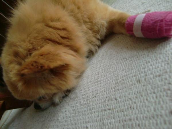 ラテくんピンクの包帯