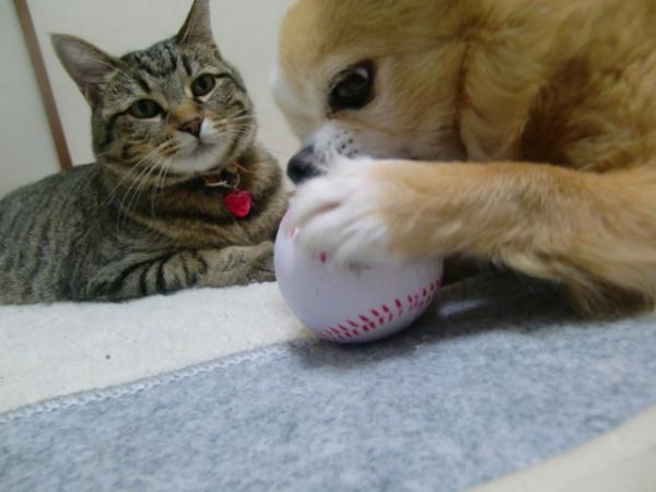 いいなぁ・・・ボール