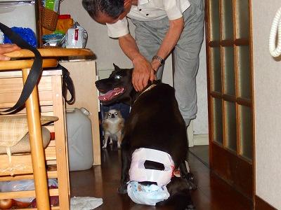 2008_1017kukku0014.jpg