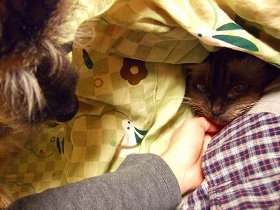 2008_1108kukku0110.jpg